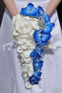 White and Blue Phalaenopsis Cascade